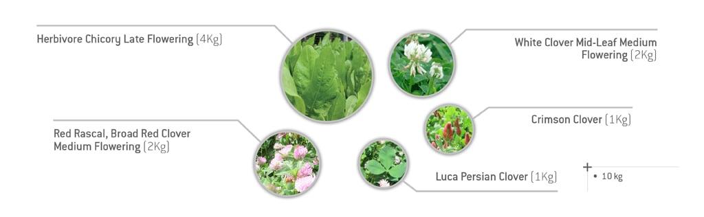 Chicory & Clovers